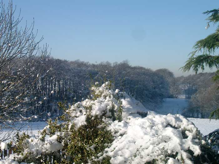 Snow0901